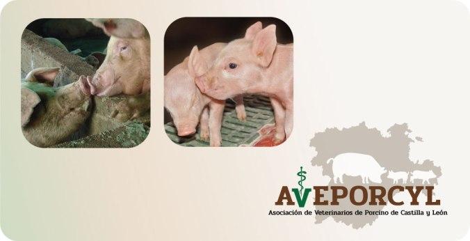 aveporcyl-asociacion-veterinarios-castilla-y-leon-inicio